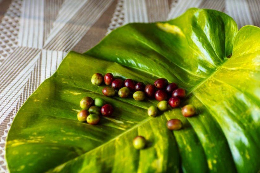 """نسبريسو تطرح توليفة نادرة من قهوة """"سبيشال ريزيرف هاواي كونا"""""""
